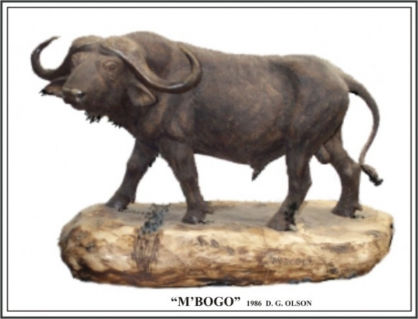 The African Cape Buffalo 1986