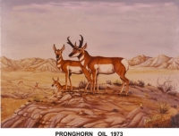 THE PRAIRIE PRONGHORN 1973 OIL