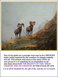 Big Horn Sheep 1970,s Oil