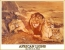 The African Lions oil 1975